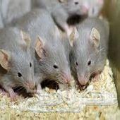 شركة رش مبيدات مكافحة الفئران والحشرات