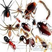 شركة رش مبيد و مكافحة حشرات