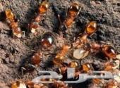 شركة مكافحة حشرات رش مبيد(0500296399)