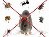رش مبيدات حشرات بالرياض تنظيف بيوت مجالس سجاد