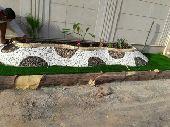 مشتل البستان لتنسيق الحدائق