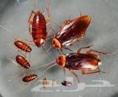 شركة مكافحة حشرات (منازل)رش مبيد رش مبيدات