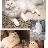 قطة للانتاج