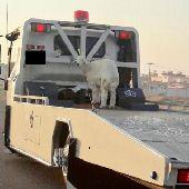 سطحه الرياض للنقل السيارات0553922916(سوداني )