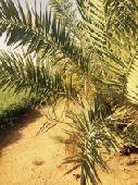 مزرعه للبيع حفر الباطن الهليباء