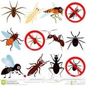رش مبيد بالرياض مكافحة الحشرات بالرياض