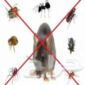 شركة مكافحة حشرات بالدمام والمنطقة الشرقية