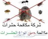 شركة مكافحة حشرات رش مبيدات بالرياض