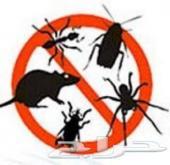 رش حشرات رش مبيدات مكافحة حشرات 0500575649