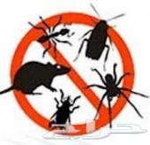 شركة مكافحة حشرات صراصير فئران نمل ابيض بالش