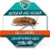 رش الصراصير النمل العته الفئران البق