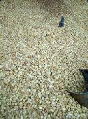 القهوة البيشية الأصليه