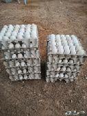 بيض بلدي الاكل و مخصب