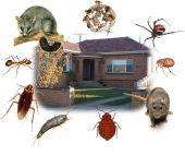 رش مبيد مكافحة حشرات مع الضمان بالرياض