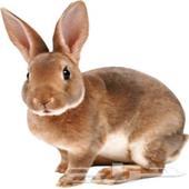 مطلوووب 13 ارنب منتجه