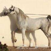 حصان واهو او شعبي