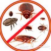 رش مبيدات مكافحة حشرات للبيوت
