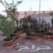 مشتل العلياءتنسيق حدائق وقص الثيل والاشجار