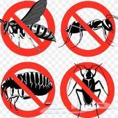 رش حشرات رش مبيدات حشرية شركة رش مبيدات
