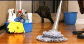 تنظيف فلل شقق خزانات مكافحة حشرات