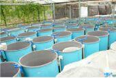 أحواض فايبر جلاس لزراعة الاسماك على حسب الطلب