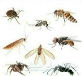 مكافحة حشرات رش مبيدات كشف تسربات عزل خزانات