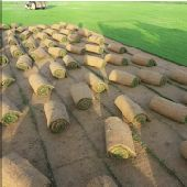 عرض عشب صناعي