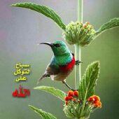 السلام عليكم ورحمة الله وبركاته  المصيف vip