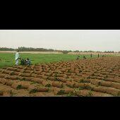 مزارع بساط الاخضر