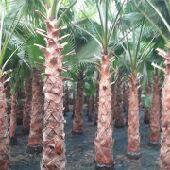 تنسيق حدائق وتركيب وزراعة تيل طبيعي وصناعى