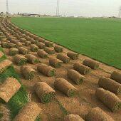 عشب طبيعي صناعى للمساحات الكبيرة وتركيب ملاعب
