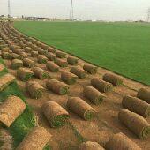 عشب طبيعي وعشب للمساحات الكبيرة وتركيب ملاعب