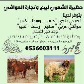 حضيرة الشمري لبيع الاغنام الرياض سوق العزيزية