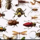 مكافحة حشرات بجده تنظيف خزانات شقق بجده