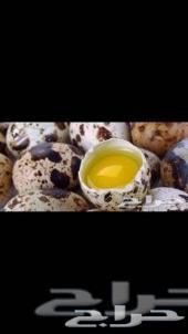 بيض سمان