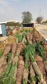 مزارع الخرج لجميع انواع الثيل ونخل
