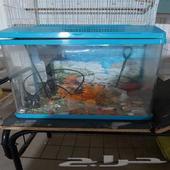 حوض سمك على السوم