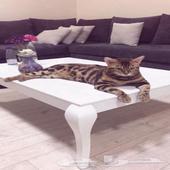 فندقة ورعاية القطط في المدينة المنورة