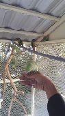 بوكيه طيور للبيع تفضل بالدخول