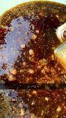 عسل عسل عسل سدر اصلي إنتاج جديد 1440
