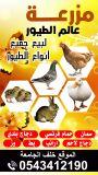 مزرعه عالم الطيور