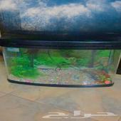 حوض سمك شبه جديد للبيع