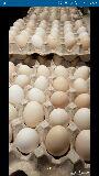 للبيع بيض دجاج بلدي للأكل و مخصب