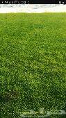 تنسيق حدائق وتوريد جميع أنواع الثيل الطبيعى