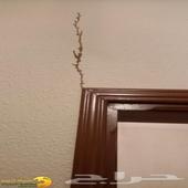 شركة مكافحة النمل بالرياض مكافحة الارضه رش