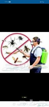 تنظيف خزانات ومكافحة حشرات بالمدينة المنورة