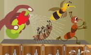 شركة مكافحة حشرات ونمل ابيض