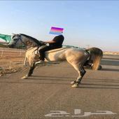 حصان شعبي شيخ للبيع او البدل المناسب