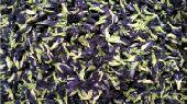 الشاي الأزرق. شاي. زهرة البازلاء