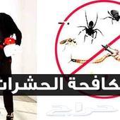 شركة مكافحة حشرات ومكافحة النمل الأبيض